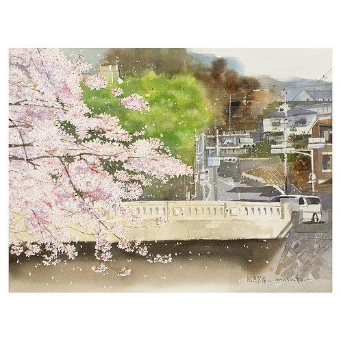 206-芦屋川の桜
