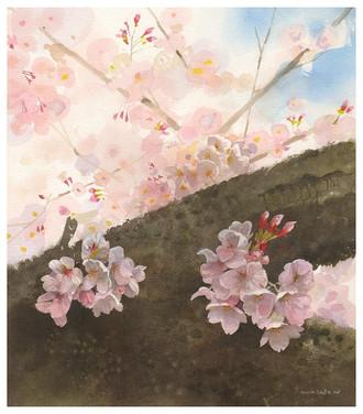 366-桜.jpg