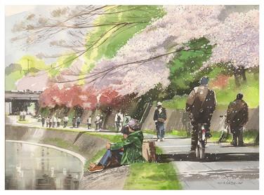 279-京都鴨川桜.jpg