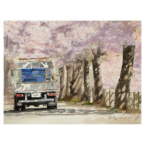 207-川沿いの桜