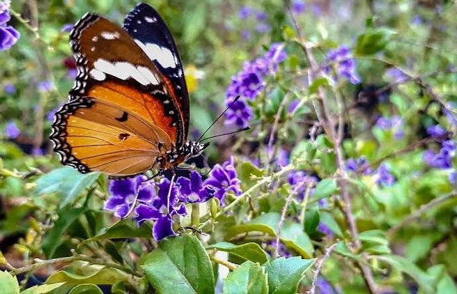 Butterfly garden2.jpg