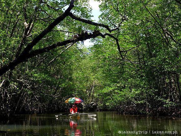 Sabang Mangrove Paddleboat Tour 2.jpg