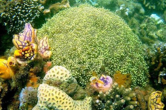 pambato reef2.jpg