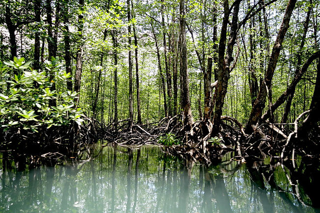 Mangrove Paddleboat Tour 2.jpg