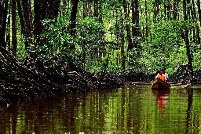 Mangrove Paddleboat Tour 1.jpg