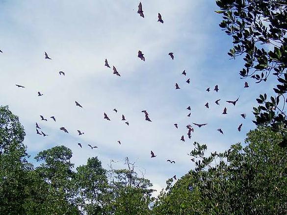Bat Island 1.jpg