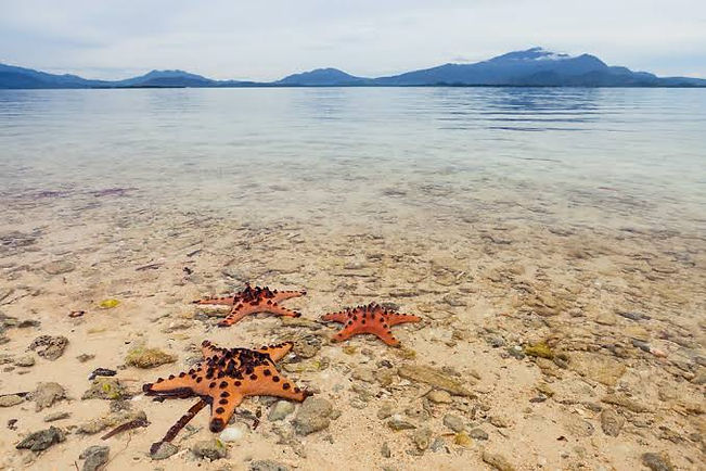Starfish island3.jpg