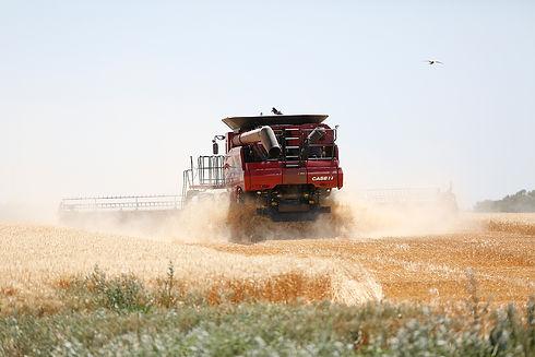 cosechadora case ih en campo