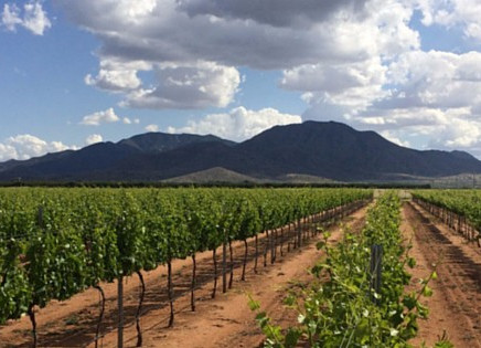 Nov. 25th - Golden Rule Vineyard -Cochise, AZ