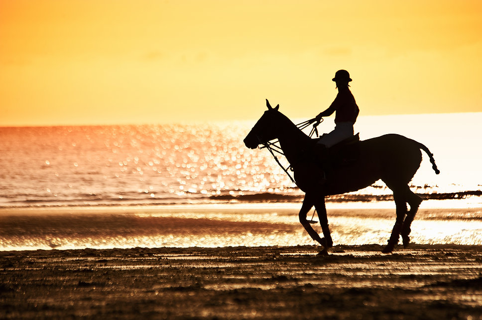 sunset,beach,horse,polo,sea,deauville,france