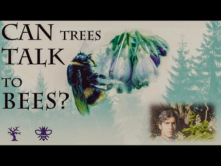 How do Trees Talk to Bees?