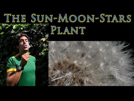 The Sun-Moon-Stars Plant
