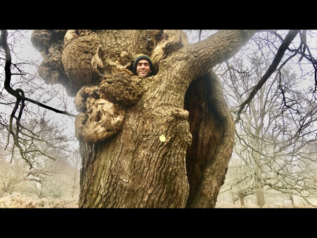 Oak Tree Attacks. Can you help?