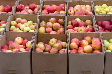 fruit carton in market.jpg