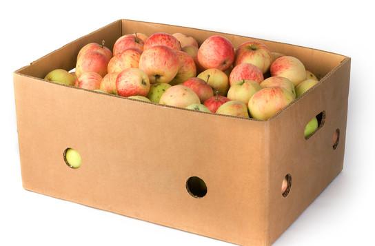 fruit box with breathing hole.jpg