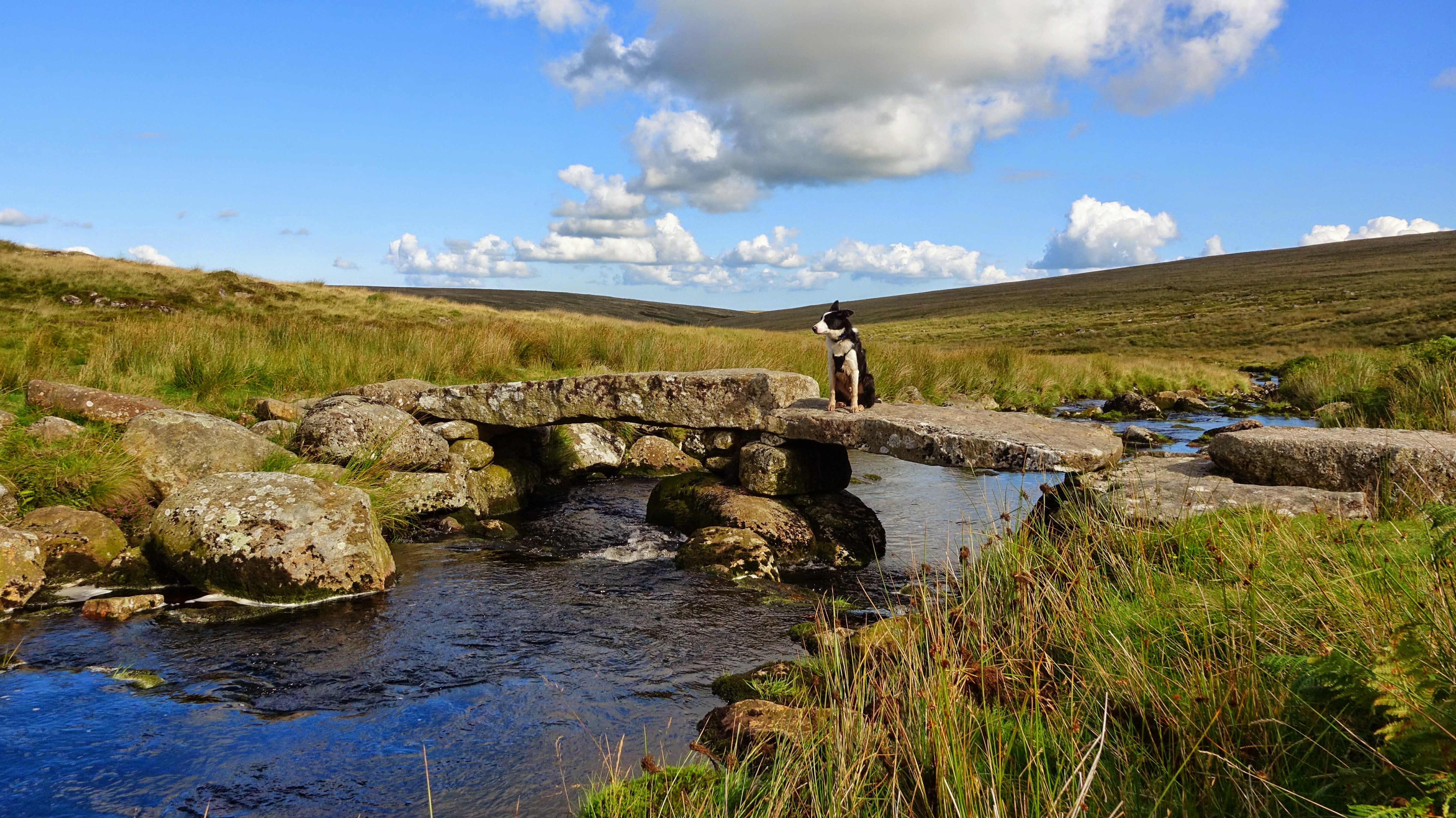 A Trip To Dartmoor