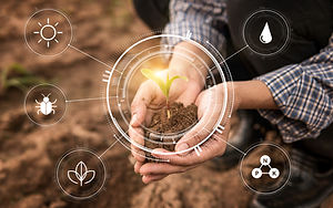 Smart farming with IoT,Growing corn seed