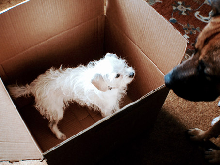 Tips on Moving with Your Dog