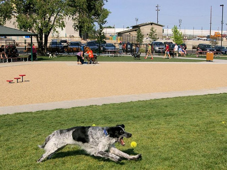 Top 7 Dog-Friendly Parks in Idaho