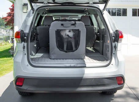 Tips for Safe Car Travel with Your Dog