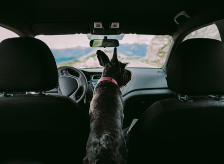 Travel Essentials for Your Pet