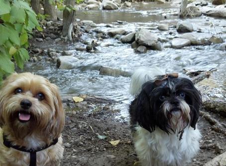 Top Dog Parks in Utah