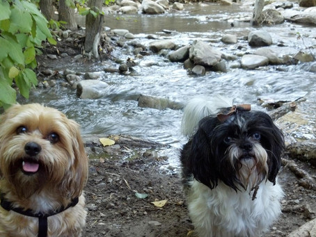 Top Dog Parks in Utah
