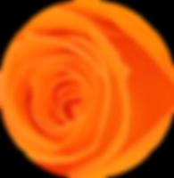 Roses éternelles oranges – Atelier 19