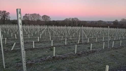 Redmoors at dawn