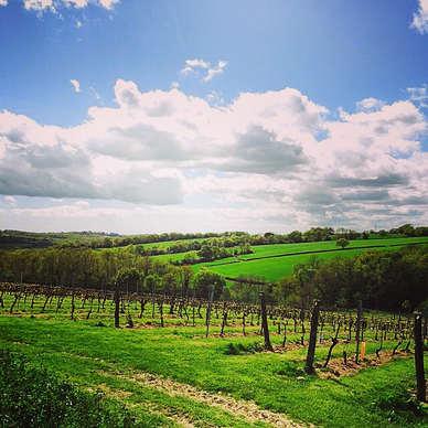 The Limney Vineyard