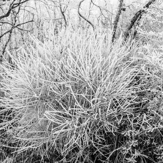 Buisson glacial