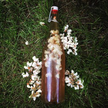 Kombucha aux fleurs de robinier