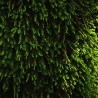 La toute petite forêt