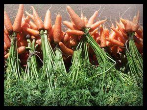 Bottes de carottes