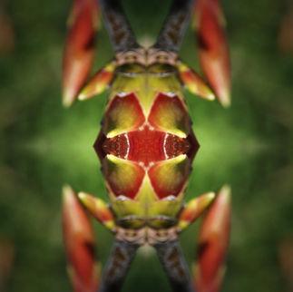 Lignum insectum