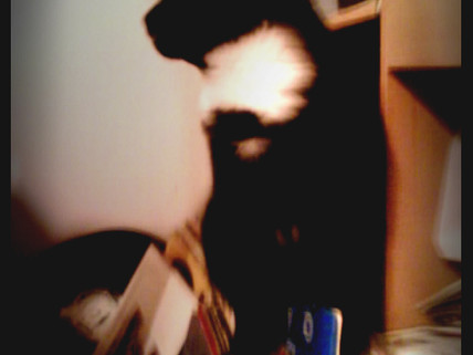 Mr Shadow AKA  CoolCat AKA Ladron