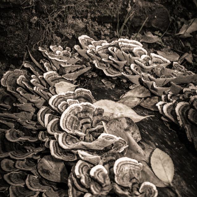 Ronde de mycelium_