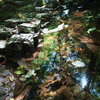Le ruisseau en été
