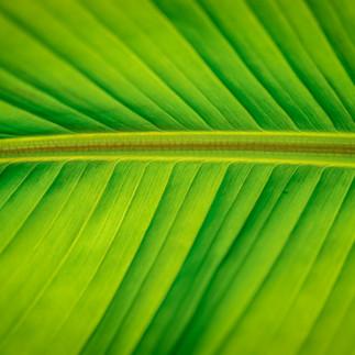Dans le vert