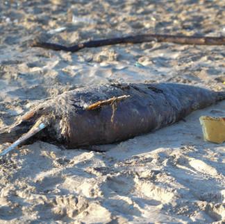 dauphin mort