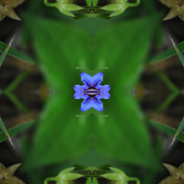 Lapis hyacinthum