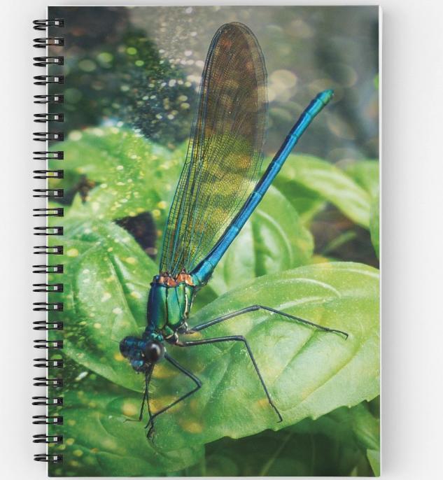 Carnet à spirale dragonfly