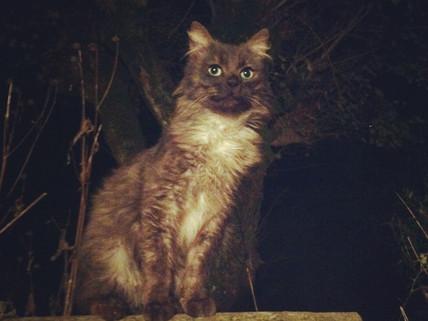 Cat, cat, cats….