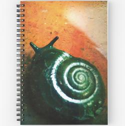 Carnet à spirale escargot
