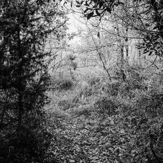 Le passage des feuilles craquantes