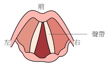 從喉部俯視