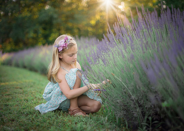 family photographer chattanooga, lavender field at sunset