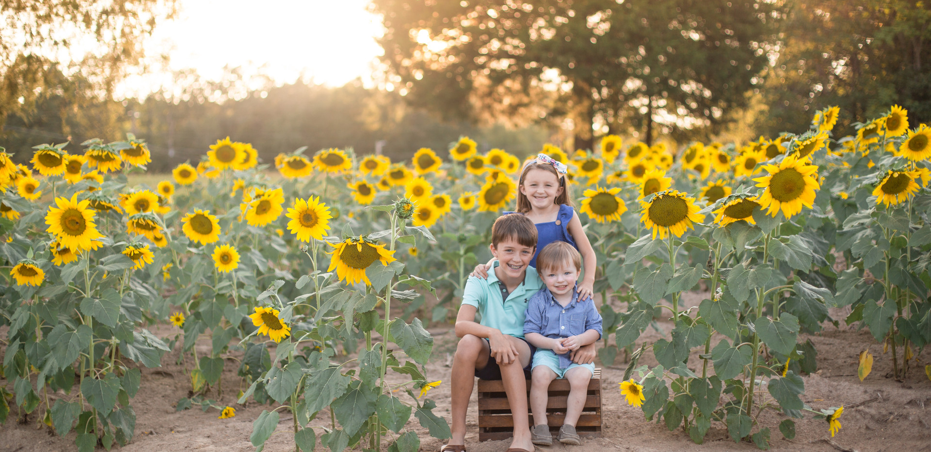 Chattanooga sunflower photos, photographer Chattanooga
