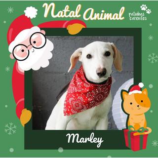 Kit Natal - Marley
