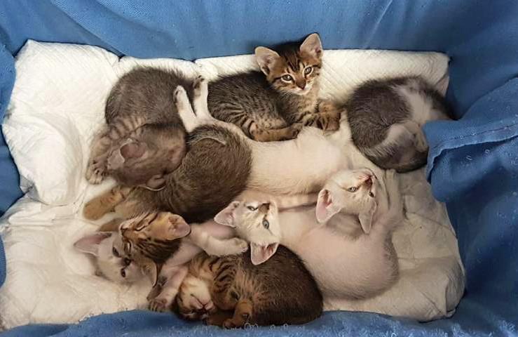 Mantenha os filhotes dentro de uma caixa de transporte